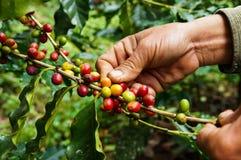 Caffè di raccolto immagini stock