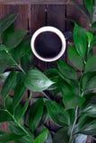 Caffè e piante fotografie stock libere da diritti