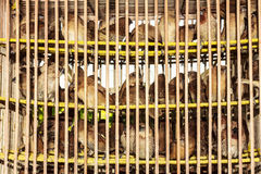 Cage à oiseaux Photo stock
