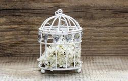 Cage à oiseaux avec des fleurs à l'intérieur sur le bois rustique Images libres de droits