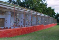 Cage à oiseaux remplie de divers oiseaux tropicaux Photos libres de droits