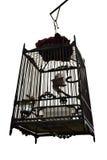 Cage à oiseaux thaïlandaise à l'arrière-plan d'isolement Photos stock