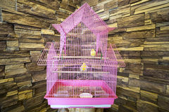 Cage of Canaries. Stock Images