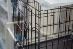 Cage de caisse ou d'animal de fil d'animal familier photographie stock libre de droits