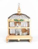 Cage de chaton photos stock