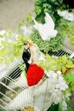 Cage de colombe avec des figurines de mariage Photographie stock