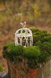 Cage de mariage avec un oiseau dans la forêt Photos stock