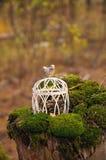 Cage de mariage avec un oiseau dans la forêt Photographie stock libre de droits