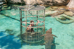 Cage diving with African crocodile Stock Image