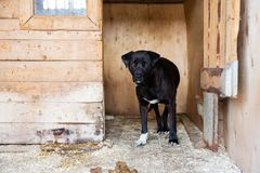 Cage for dogs in animal shelter. Dogs in the cage in animal shelter stock images
