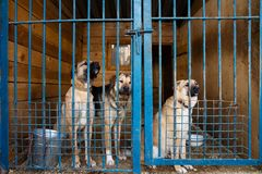 Cage for dogs in animal shelter. Dogs in the cage in animal shelter stock photography