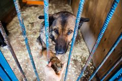 Cage for dogs in animal shelter. Dogs in the cage in animal shelter royalty free stock image