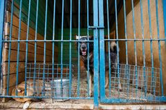 Cage for dogs in animal shelter. Dogs in the cage in animal shelter stock photo