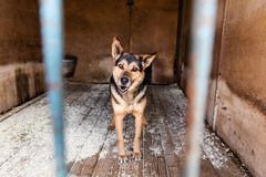 Cage with dogs in animal shelter. Dogs in the cage in animal shelter stock photo