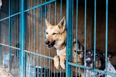 Cage with dogs in animal shelter. Dogs in the cage in animal shelter stock photos