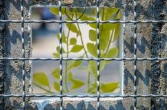 Cage en acier Images stock