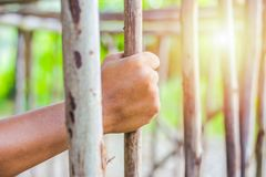 Cage en bois de crochet de main photos stock