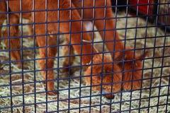 Cage en métal Photos libres de droits