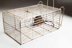 Cage en métal avec un rat emprisonné Photographie stock