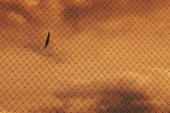 CAGE OF FREEDOM Royalty Free Stock Image