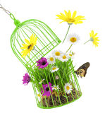 Cage with grass,flowers and insects Royalty Free Stock Images
