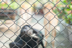 The cage or grille and dogs. Inside Royalty Free Stock Photography