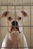 cage hunden Arkivfoto