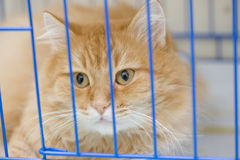 cage katten Royaltyfri Foto