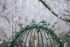 Cage noire avec les branches vertes Photos libres de droits