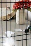 Cage à oiseaux Images stock