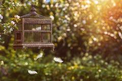 Cage à oiseaux au printemps Images stock