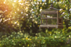 Cage à oiseaux d'Edwardian Photo stock