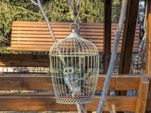 Cage with owl figurine hanging on a branch in the garden stock images