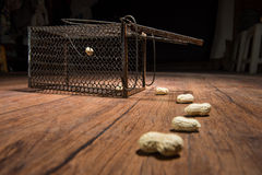 Cage rouillée de rat Images libres de droits