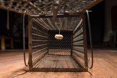 Cage rouillée de rat photo libre de droits