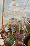 The cage of Succulents. Flowers Stock Image