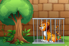 A cage with a tiger Royalty Free Stock Image