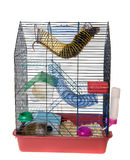 Cage with two rats Royalty Free Stock Image