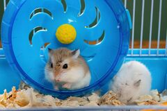 a cage with two small hamsters