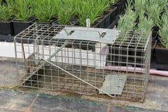 Cage type humane rat trap. Steel humane rat trap set up in a garden nursery royalty free stock photo