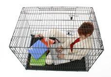 caged arkivfoton