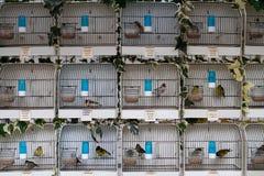 Caged Fotografering för Bildbyråer