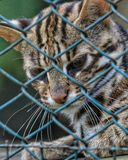 caged Photo libre de droits