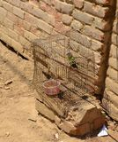 Caged Alley Bird. Found an alley outside a shac home behind the beaches of Mancora, Peru stock photography