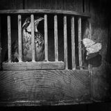 Caged Bird royalty free stock photos