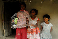 Caged Bird Stock Photos