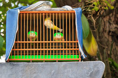 Caged bird Royalty Free Stock Image