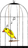Caged bird. Yellow canary singing in a cage illustration Royalty Free Stock Photo