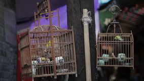 Caged bird flapping around in wooden cage for sale on street stock video footage