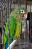 Caged Bird-Huatulco Mexico. Photo of caged Parakeet in Huatulco Mexico Royalty Free Stock Image